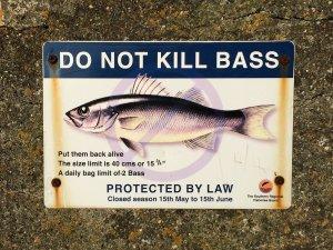 vorschriften zum wolfsbarsch angeln